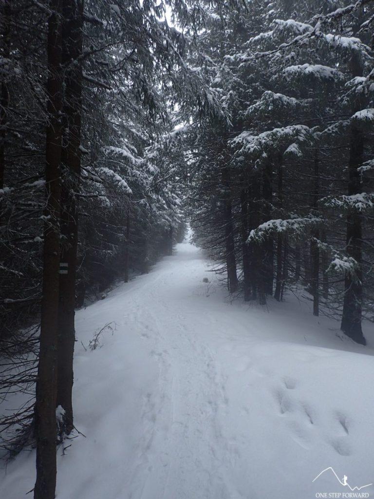 Podejście na Gęsią Szyję - wchodzimy w gęsty las