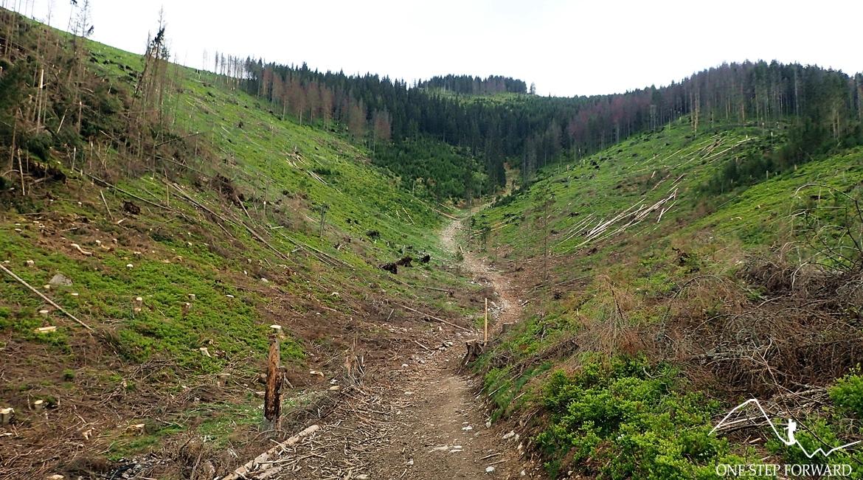 Czerwony szlak prowadzi przez Kulowiec
