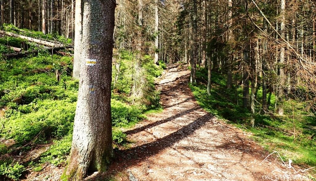 Żółty szlak na Iwaniacką Przełęcz