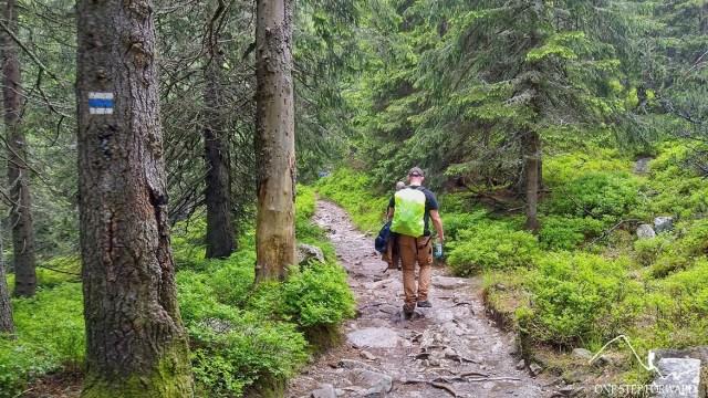 Niebieski szlak na Koprowy Wierch - świerkowy las