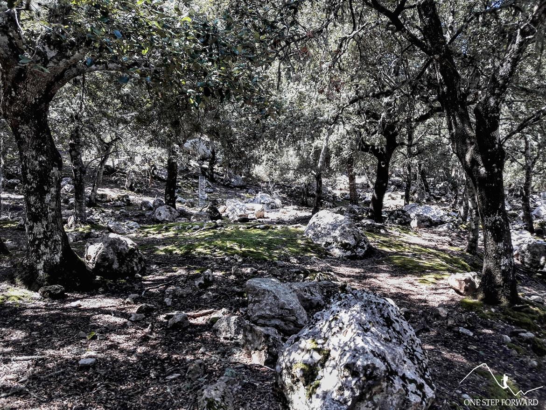 Trekking na Majorce - okolice Son Macip
