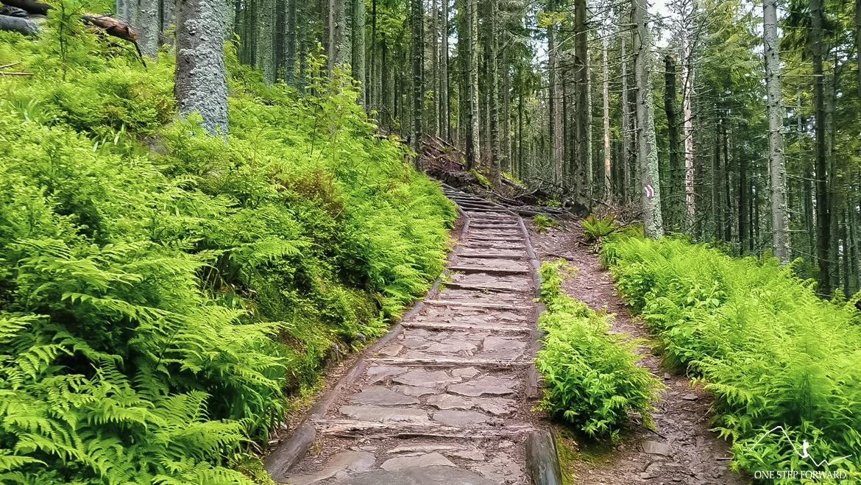 Babia Góra - ścieżka pośród lasu