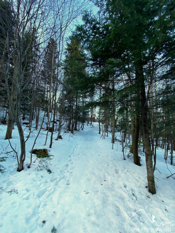 Niebieski szlak na Skrzyczne - odcinek leśny