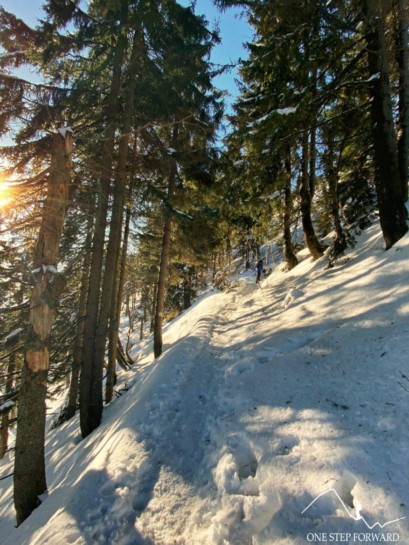 Trawers północno - wschodniego zbocza Skrzycznego - Beskid Śląski