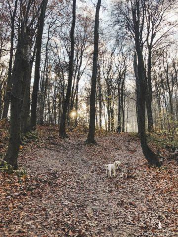 Las Wolski - ścieżki spacerowe