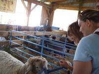 Betsy_am_sheep