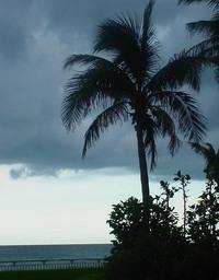 Palm_beach