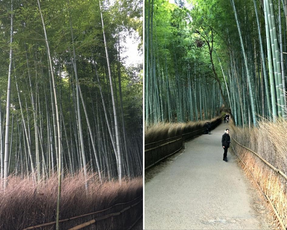 foresta di bambu kyoto