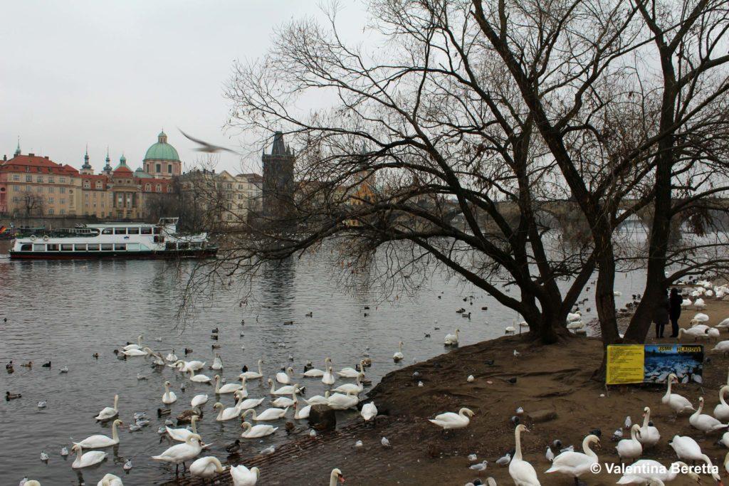 fiume moldava