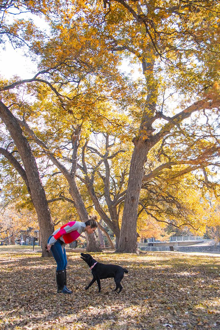 fall wonderland in San Antonio 7