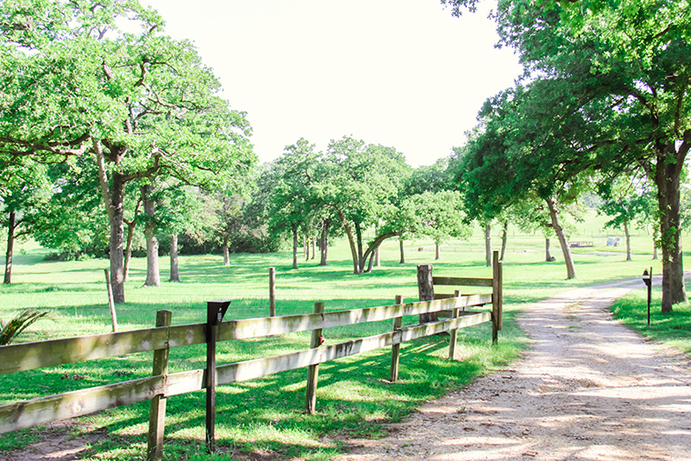 Texas Treehouse Getaway 8