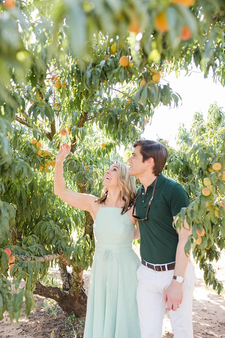 Peach Picking In Fredericksburg 4