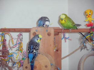 Lennie, Perry & Dalai on the playgym