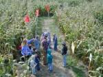 Kids walking lanes of corn maze in Randolph, Ohio