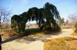 A natural arch at Secrest Arboretum