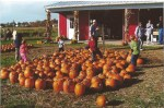 Prepicked pumpkins at Ridgeview Farm Market for those who don't want to pick their own