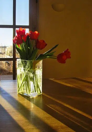 celebrate_flowers