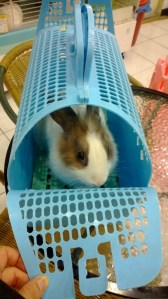台北市愛兔之家 -5