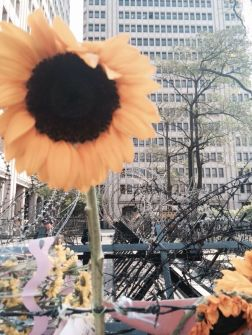 318 sunflower movement 200 hous 1