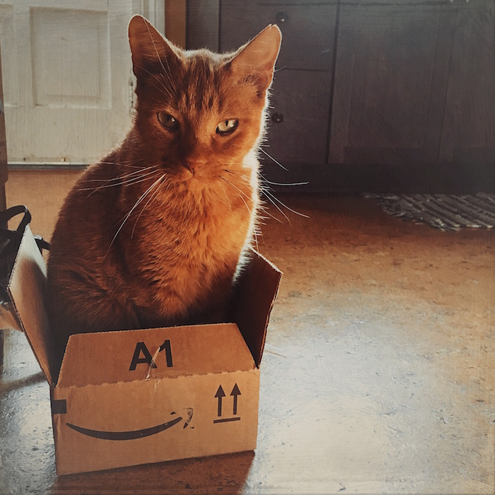 photo of a cat in a box looking adorable