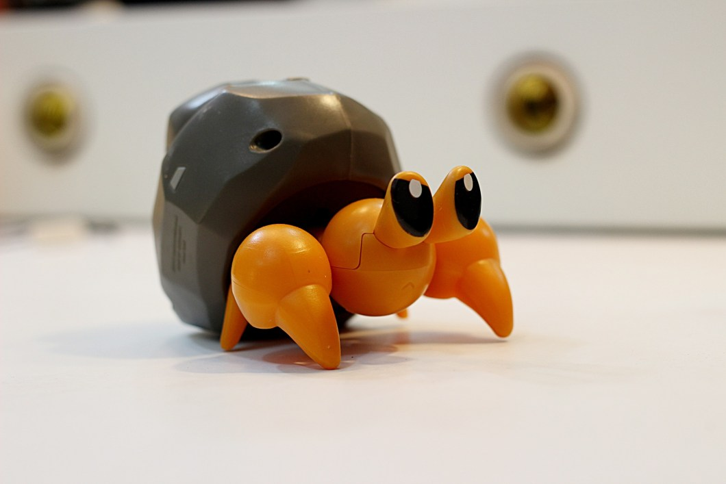 Hermit crab as a pet!?