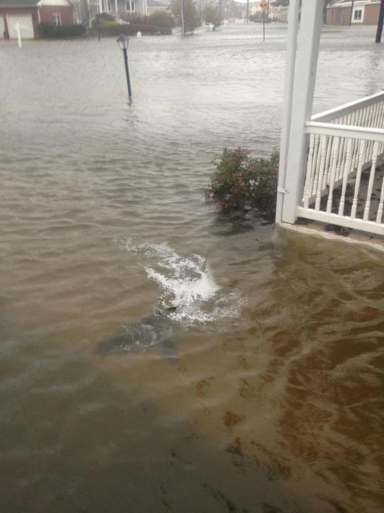 Shark after a storm.