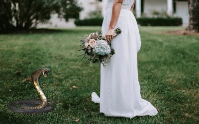 The Biting Cobra: How God Saved My Wedding Business  Through a Dream