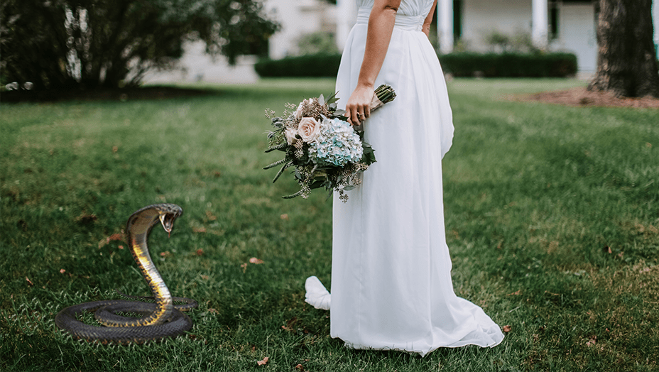 The Biting Cobra: How God Saved My Wedding Business  Through a Dream