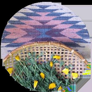 21_GardenMedicine