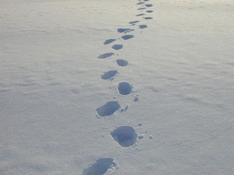 snowy footsteps