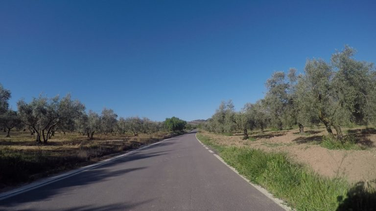 Olivenbäume so weit das Auge reicht