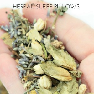 The Quest For More Sleep: How Herbs Can Help