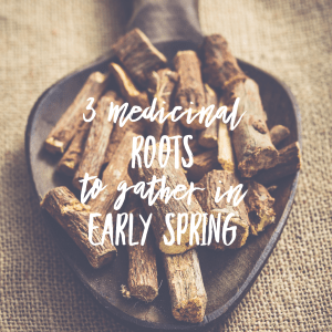 3 Medicinal Roots to Gather in Early Spring