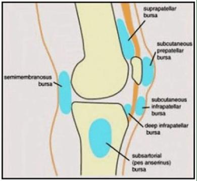 Diagram of bursa in knee data wiring diagrams one world brazilian jiu jitsu page 5 of 7 brazilian jiu jitsu rh oneworldjiujitsu com knee bursa inflammation knee anatomy bursa ccuart Gallery