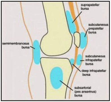 Knee injuries and what to do about it one world brazilian jiu jitsu knee diagram ccuart Gallery