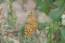 Kollege Schmetterling