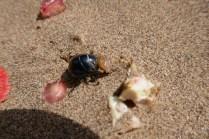 Die Käfer machen sich über die Obstreste her :-)