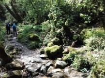 Auf den letzten Kilometern der Tour ist die Vegetation dann wieder dschungelartig. Das nahe Pokhara ist die Stadt mit dem meisten Niederschlag im Land.