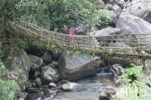 """Die längste """"Living Root Bridge"""" überhaupt. Hier wachsen die Wurzeln von zwei gegenüberstehenden Bäumen zu einer Brücke zusammen. Würde gerne wissen, wie sie darauf kommen."""