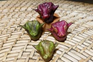 Die Büffelköpfe nennen sich Wasserfrucht, der Geschmack erinnert an Litchi.