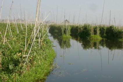 Schwimmende Gärten auf dem Inle-See. Man läuft drauf wie auf 'nem Wasserbett :-)