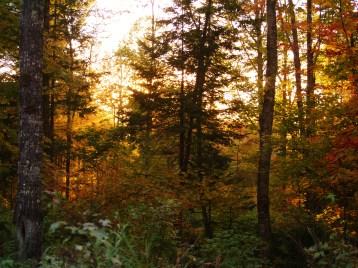 maine, fall, forest, foliage