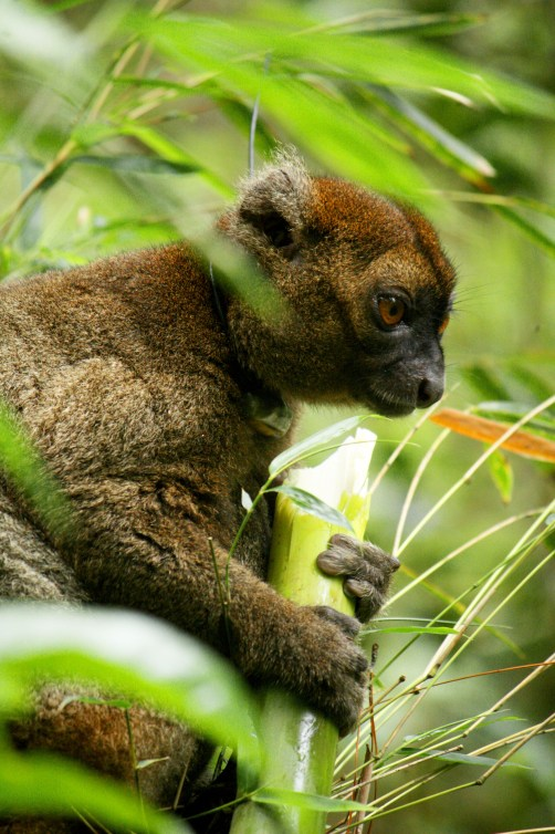lemur, nature, wildlife, snack, madagascar