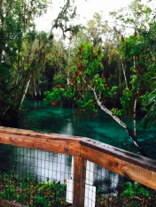 springs, florida, three sisters, nature