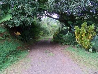 Path to the farm