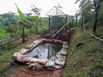 Tilapia pond for aquaponics