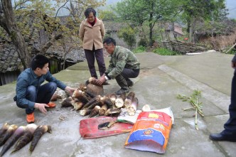Shorting through the bamboo shoots we collected that afternoon.