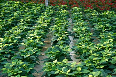 Water and Nutrient for Greenhousehouse and Container Nursery Pro