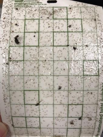 San Jose scale pheromone trap