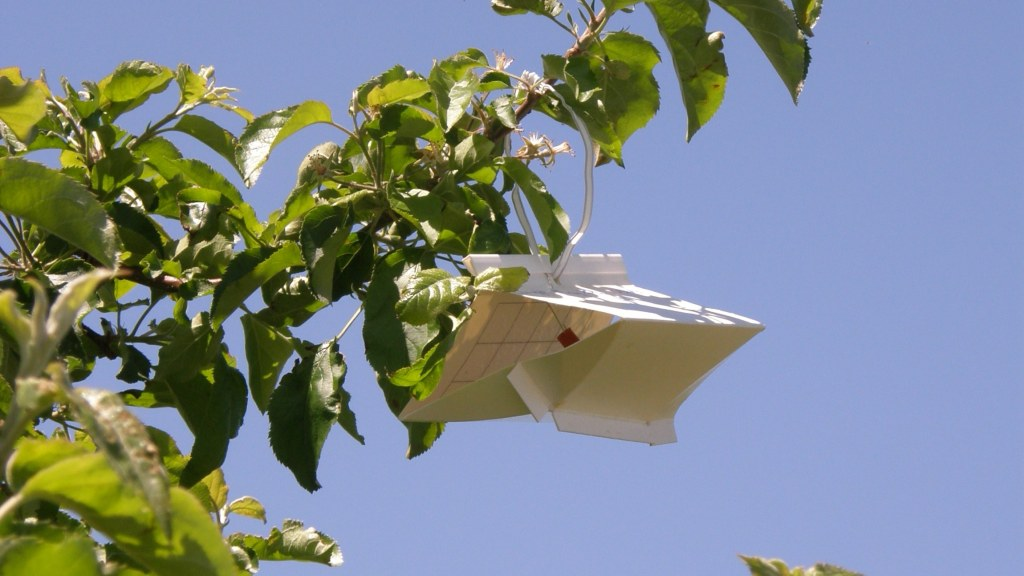 diamond phermone trap on apple branch